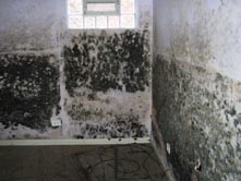 DIY Mold Test can help prevent serious damage